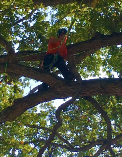 Higher Ground Tree Care