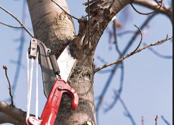 Pruning Tips for Homeowners